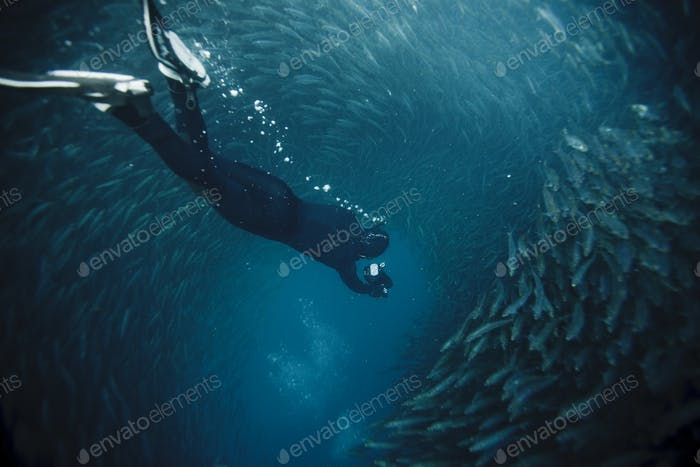 free diving into a sardine ball