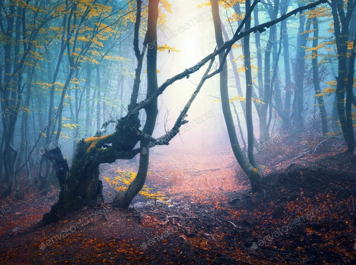 Autumn forest in blue fog and yellow sunlight