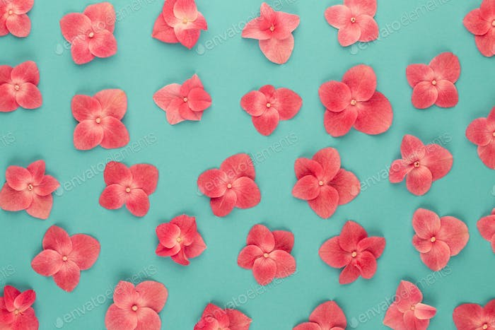Flowers composition. Pattern made of pink flowers background.