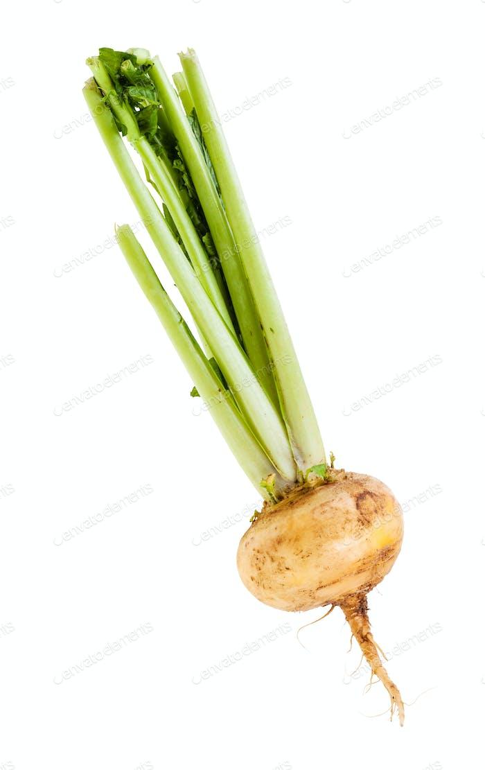 single fresh organic turnip with stems isolated