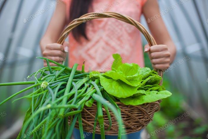 Nahaufnahme eines Korbes mit Grüns in den Händen der Frau