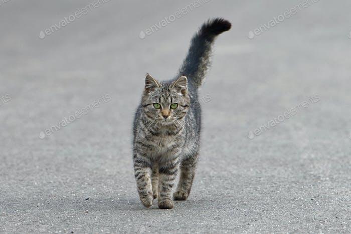 Portrait of shaggy cat on a asphalt road