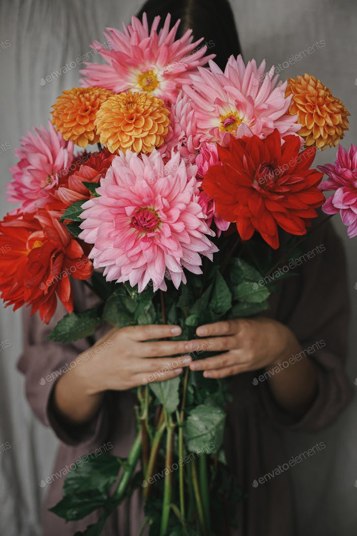 Autumn flowers bouquet in woman hands close up in rustic room. Woman in linen dress with dahlias
