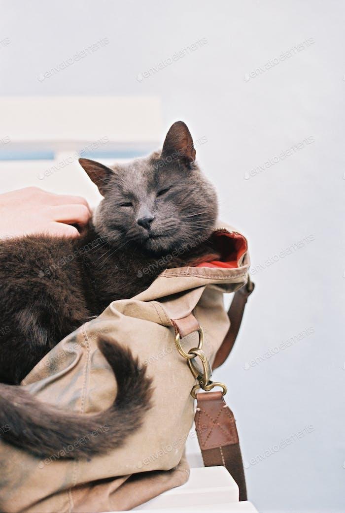 A small grey cat sitting in a handbag.