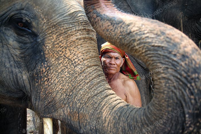Portrait of Elephant and mahout in the forest.