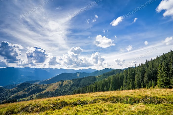 Amazing sunny landscape with pine tree highland forest