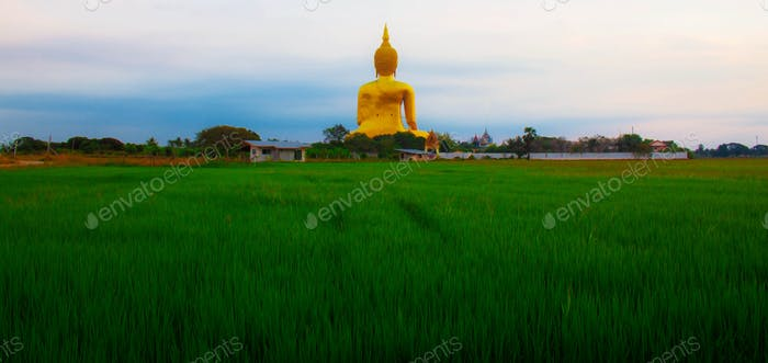 Buddha on green field