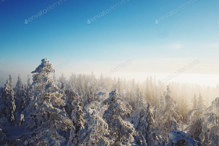 Winter over a forest