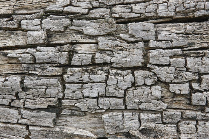 Tree bark surface. Textured wooden background. Horizontal