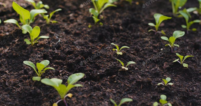 Planting sprout in the farm