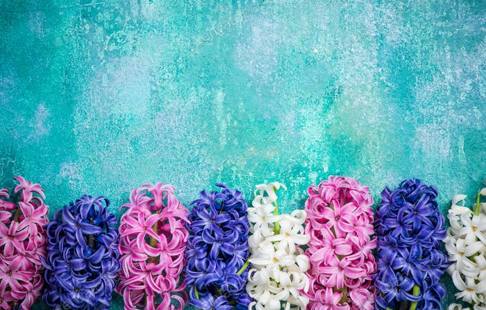 Hyacinth flowers on concrete slate, colorful card mock up