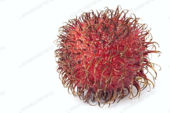Ganze einzelne frische Rambutan