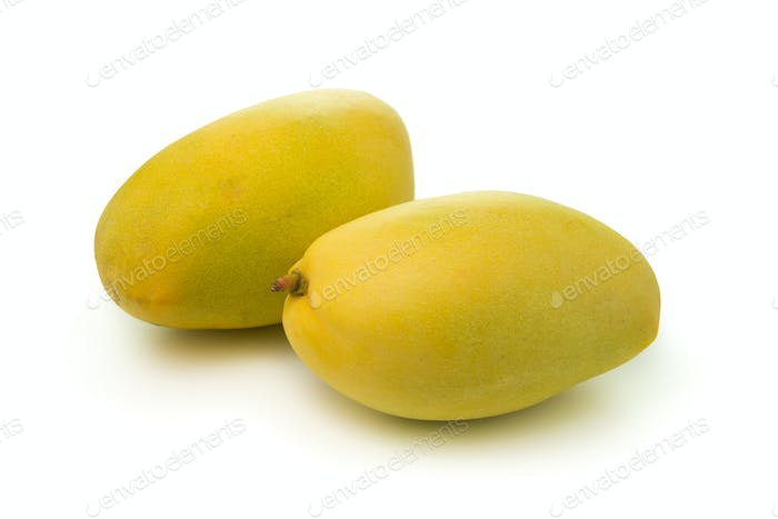 Mangos on white background