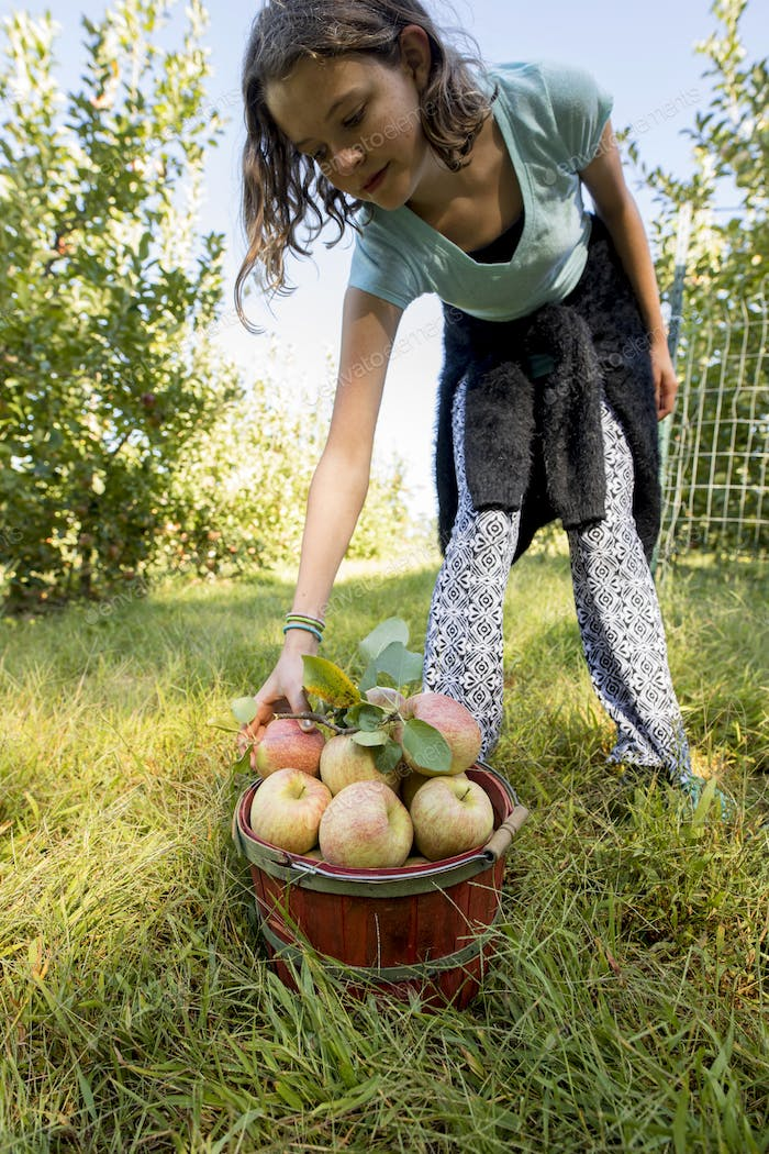 Teen girl picking apples