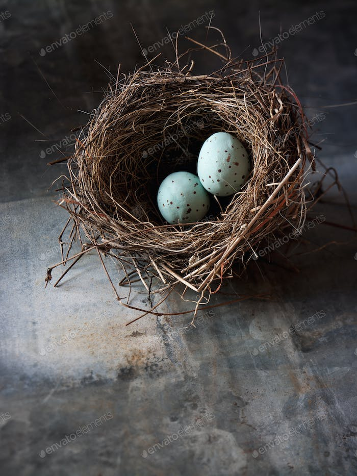 A small intricately woven bird's nest. Two small turquoise eggs.