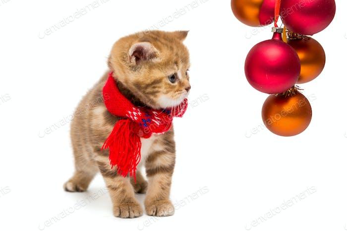 Kleine britische Kätzchen und Weihnachten