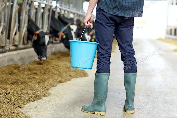 man with bucket in cowshed on dairy farm