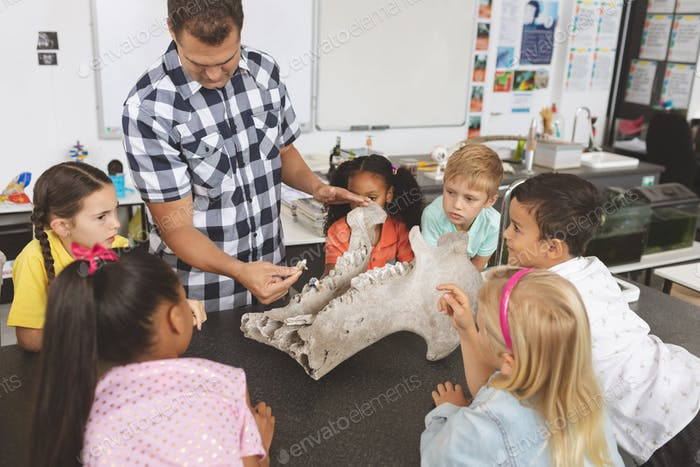 Front view of a teacher explaining and showing animal skeleton to his pupils in classroom
