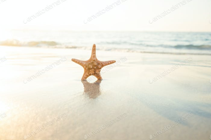 Starfish on the sand on beautiful see