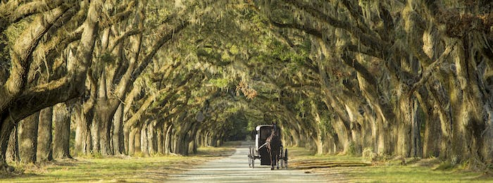 Carriage on Southern Plantation.