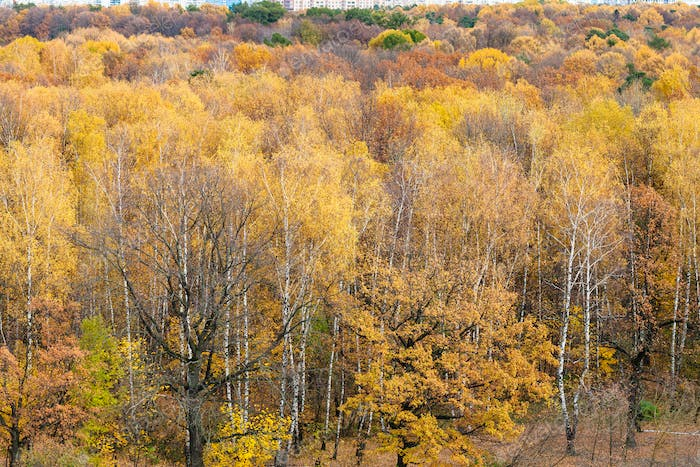 above view of forest glade in urban park in autumn