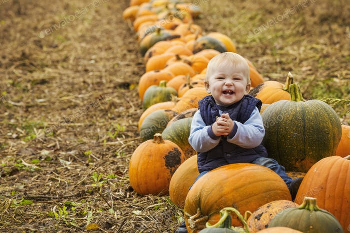 A small boy sitting among rows of bright yellow, green and orange pumpkins laughing and clapping his