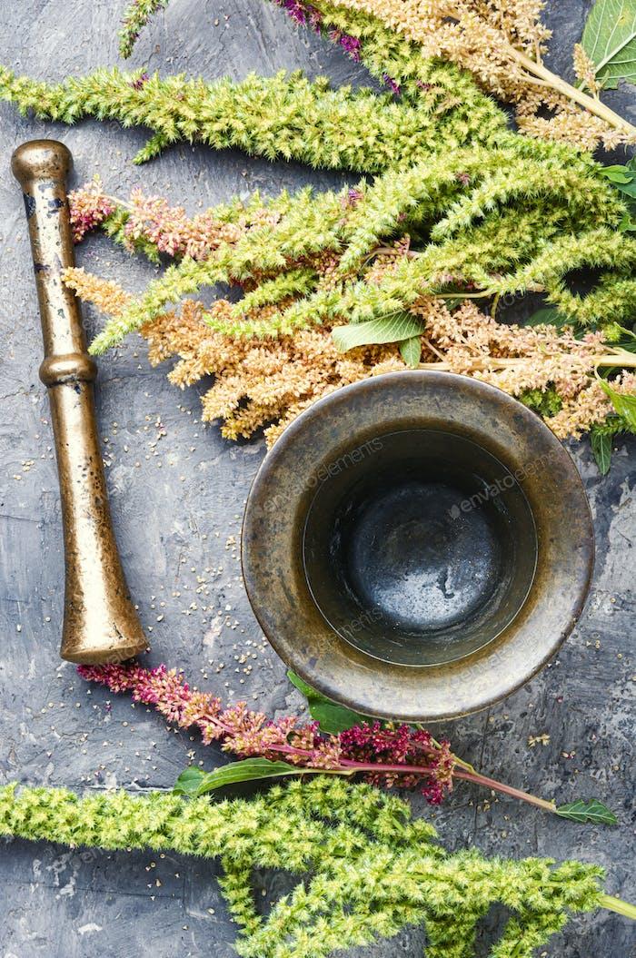 Amaranth and herbal medicine