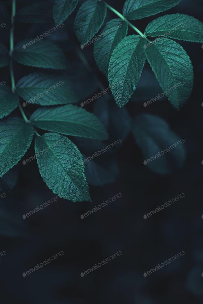 Dark Emerald Background with Fresh Leaves