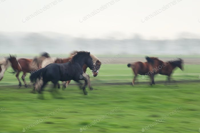 blurred galloping horses on pasture