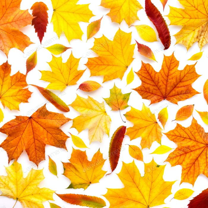 Colorful autumn leaves on white background. Top view
