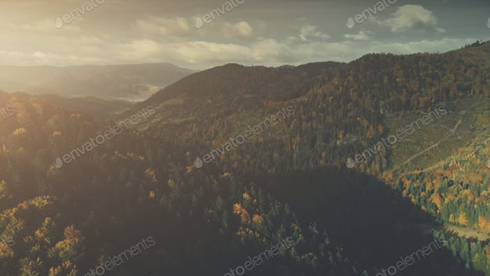 Autumn dense forest mountain scenery aerial view
