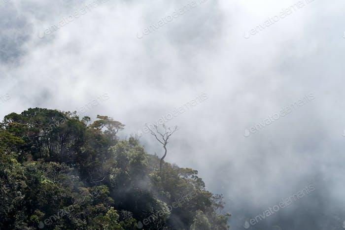 Scenic misty view of World's End in Sri Lanka