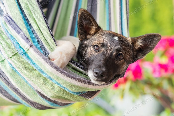 Close up of happy dog lying in striped hammock.