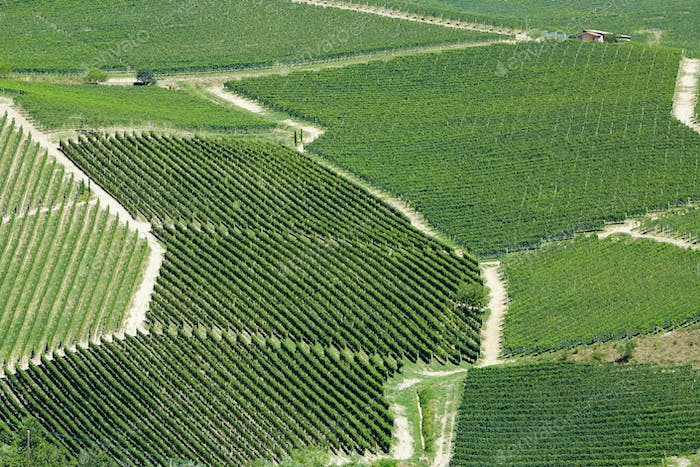 Vineyards aerial view in a sunny day in Piedmont, Italy