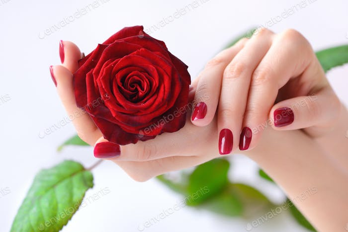 Hands of a woman with red manicure with red rose on white backgr