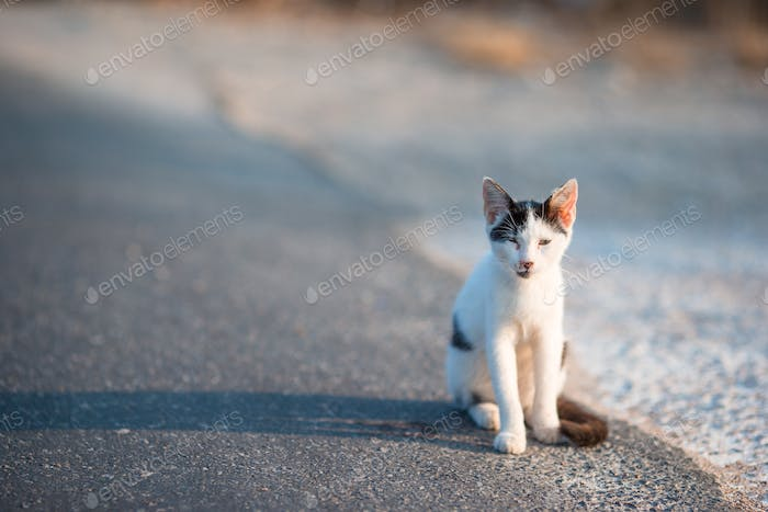 Tricolor homeless cat on the road in Greece