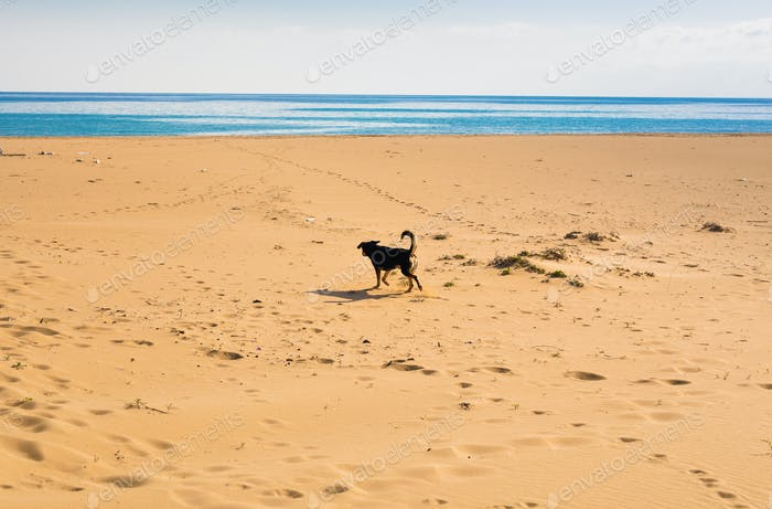 Dog walking on the beach