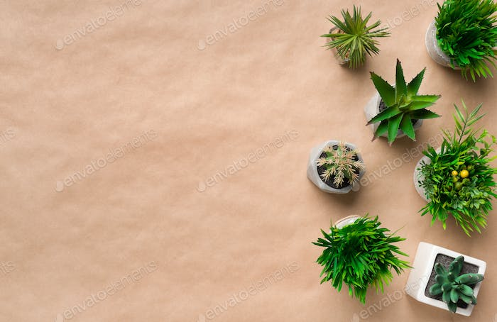 Mini succulent plants in pots on craft paper background