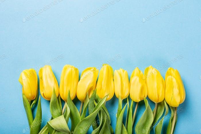 Gelbe Tulpen Hintergrund