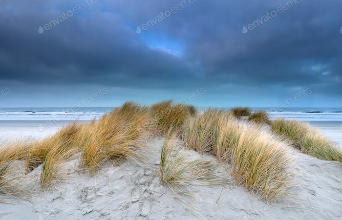 sand dune on windy coast