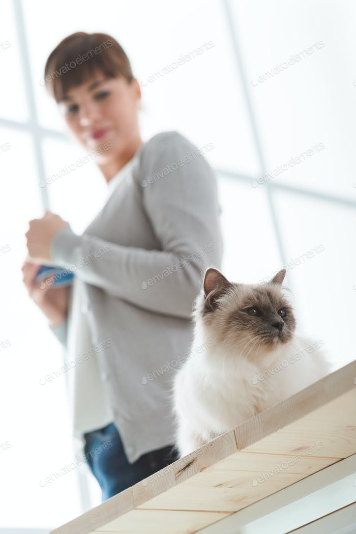 Katze zu Hause