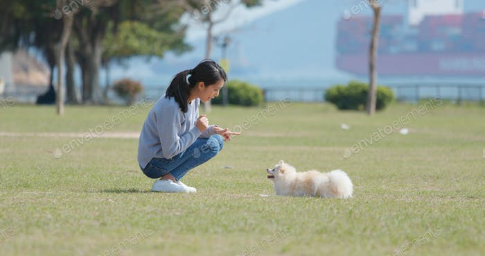 Woman training with her dog with snack at park