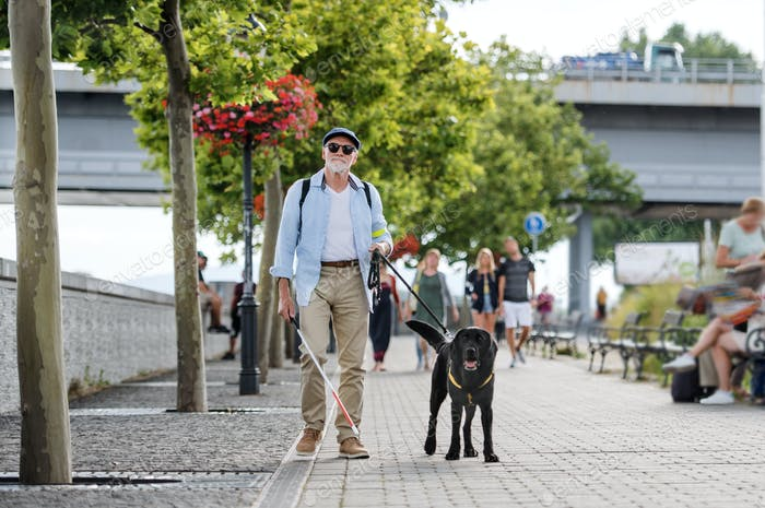 Senior blind man with guide dog walking outdoors in city.