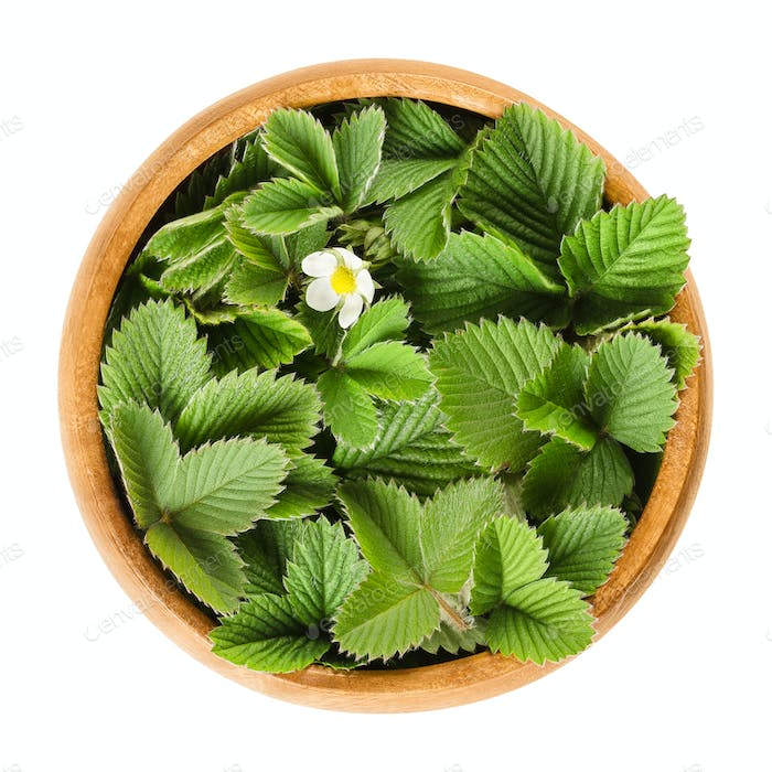 European wild strawberry leaves in wooden bowl