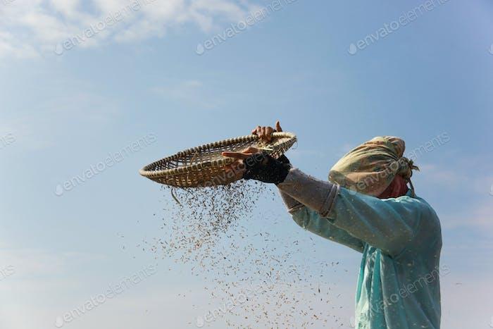 Bauer in der Erntezeit