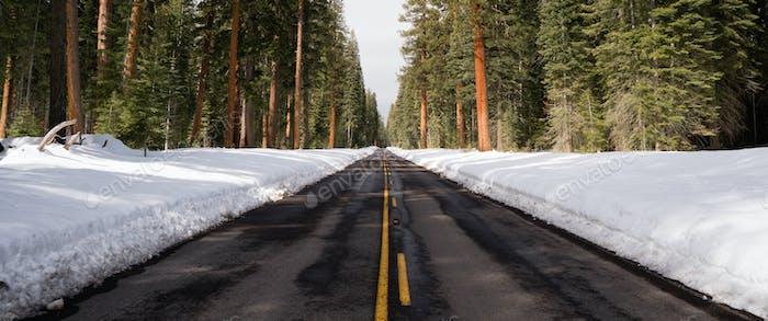Zweispurige Asphaltstraße führt durch Wald Winterzeit