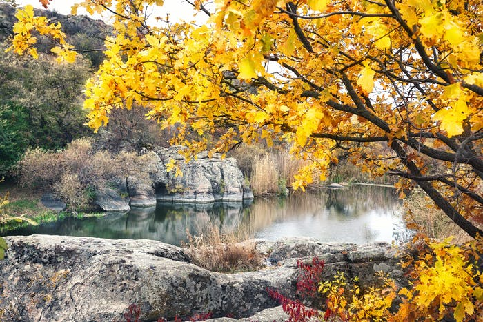 Lake in mountains under yellow tree