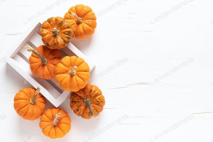 Kleine dekorative Kürbisse, Halloween und Thanksgiving Hintergrund
