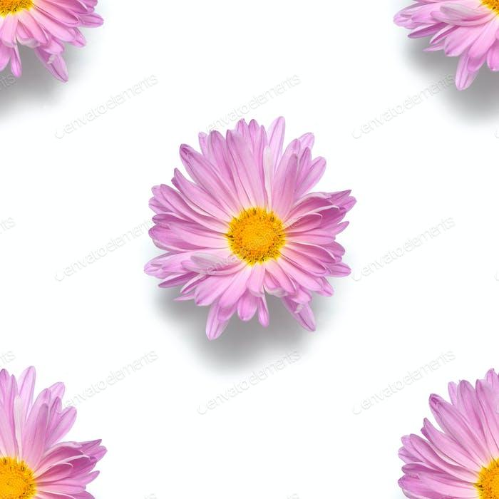 Makromuster Blütenknospe isoliert auf weißem Hintergrund