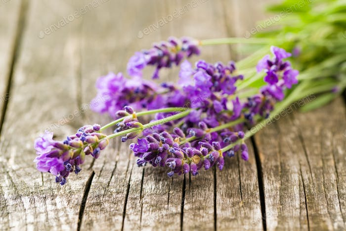 The lavender flowers.